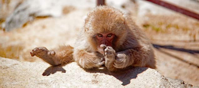 blog-matrix-monkey